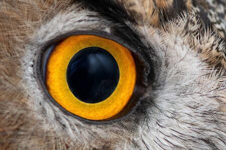 Eagle owl eye close-up, eye of the Eurasian Eagle Owl, bubo bubo Фото со стока