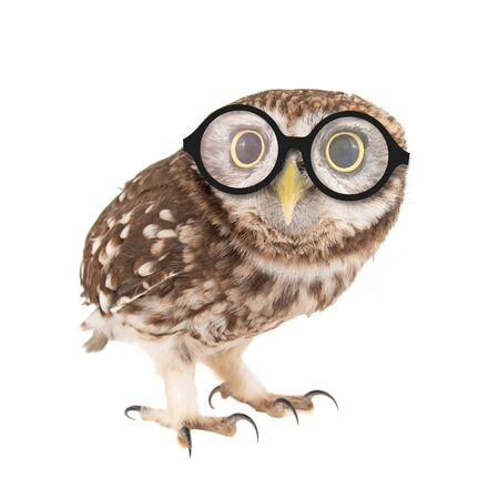Little Owl wearing glasses, Athene noctua, standing on a white background. Фото со стока