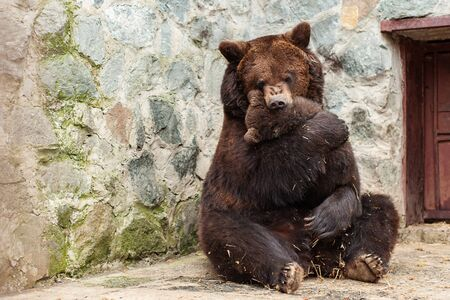 Mother bear with cute cub in zoo. 写真素材