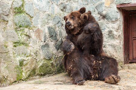 Mother bear with cute cub in zoo. Reklamní fotografie
