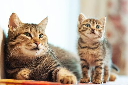 Little kitten with mom. Tabby cat baby,