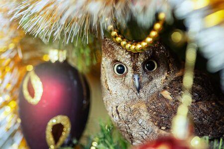 European scops owl, Otus scops, sitting on a branchsitting on a Christmas tree near Christmas toys.
