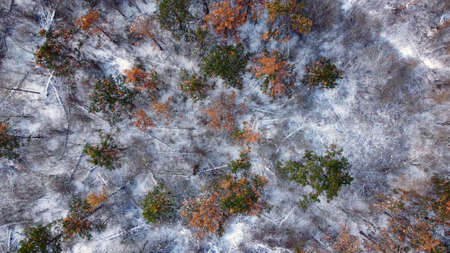 Winter landscape from high above. Drone view photography.