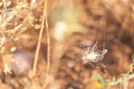 The spider caught its prey in its web.
