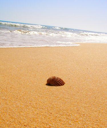 Orange seashell on the beach         photo