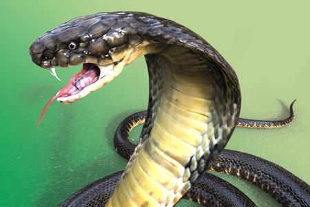 Close-Up Van 3D King Cobra 's Werelds langste gifslang op groen