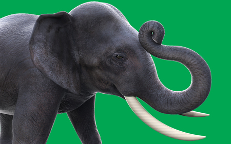 dangerous love: 3D elephants isolated on green background