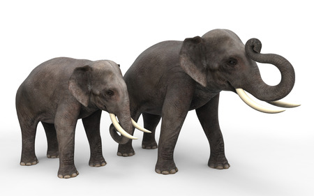3D elephants standing isolated on white background