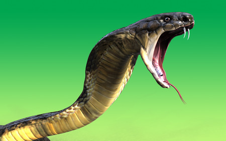 3d scary: Close-up of 3d King cobra snake attack  isolated on green background