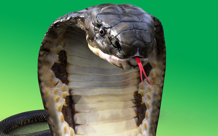 Close-Up Of 3D king Cobra The worlds longest venomous snake on green Stock Photo