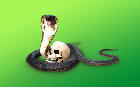 3D rendering King cobra snake attack and skull isolated on green background, 3D illustration King cobra snake