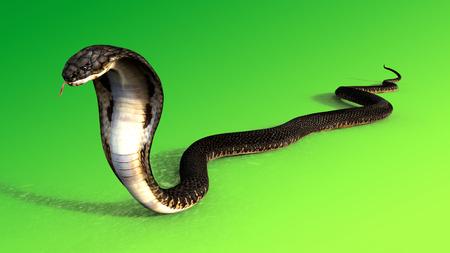 3d King Cobra The worlds longest venomous snake isolated on green background, King cobra snake 3d illustration, King cobra snake 3d Rendering