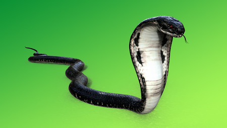 venomous: 3d King Cobra The worlds longest venomous snake isolated on green background, King cobra snake 3d illustration, Red eye snake 3d Rendering