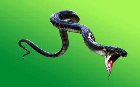 3d King Cobra Black Snake The world's longest venomous snake isolated on green background, King cobra snake 3d illustration, King cobra snake 3d Rendering Stockfoto