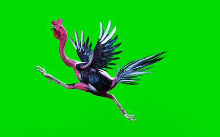 cockfighting: A cockfight moving and jumping on green background, 3d illustration