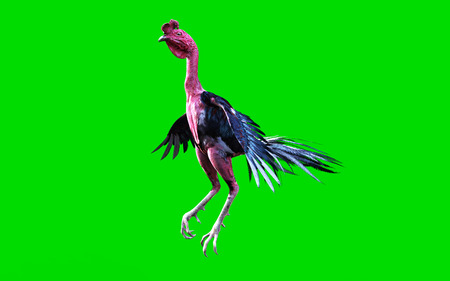 A cockfight moving and jumping on green background, 3d illustration