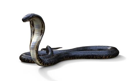 longest: 3d King Cobra The Worlds Longest Venomous Snake Isolated on White Background, King Cobra Snake, 3d Illustration, 3d Rendering