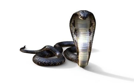 3D King Cobra De langste giftige Slang van de Wereld Geïsoleerd op een witte achtergrond, King Cobra Snake, 3d Illustratie, 3D-rendering Stockfoto