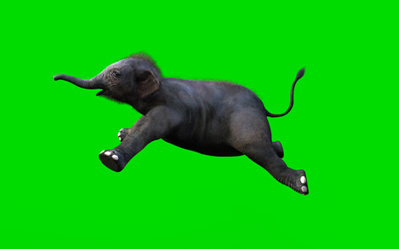 Baby Elephant Moving and Jumping On Green Background, 3d Illustration