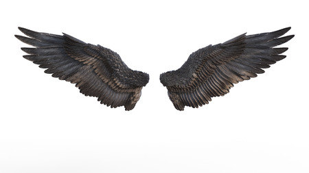 3d Illustration Demon Wings, Black Wing Plumage Isolated on White Background.