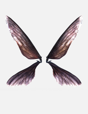 3d illustration wings of insect isolate on white background with clipping path Stock Photo