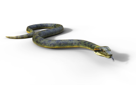 3d Illustration Anaconda, Boa Constrictor The Worlds Biggest Venomous Snake Isolated on White Background, 3d Rendering