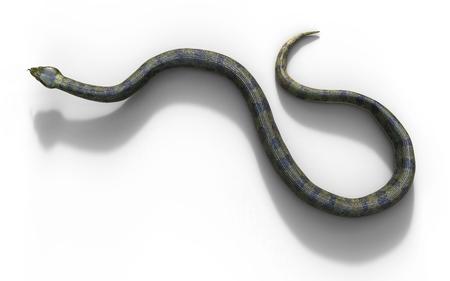 3d Illustration Anaconda, Boa Constrictor The Worlds Biggest Venomous Snake Isolated on White Background, 3d Rendering