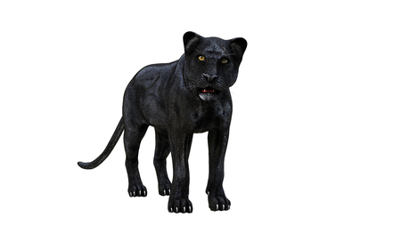 Black panther isolate on white background, Black tiger, 3d Illustration, 3d render Reklamní fotografie