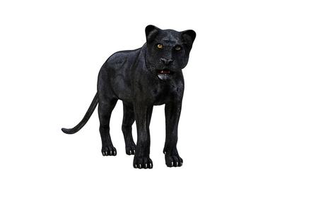 Black panther isolate on white background, Black tiger, 3d Illustration, 3d render Standard-Bild