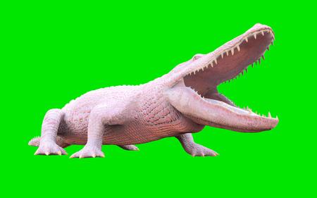 3D Illustration of albino American alligator isolated on green background, American crocodile