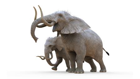 3d Illustration Elephant Isolate on White Background. Albino Elephant.