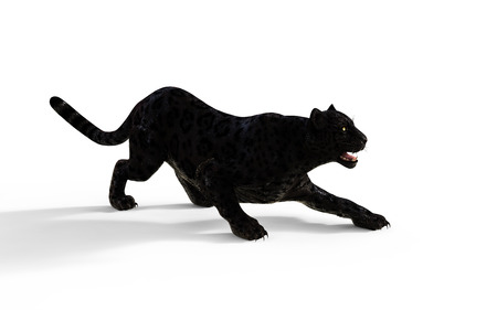 3d Illustration Black Panther Isolate on White Background  Black Tiger