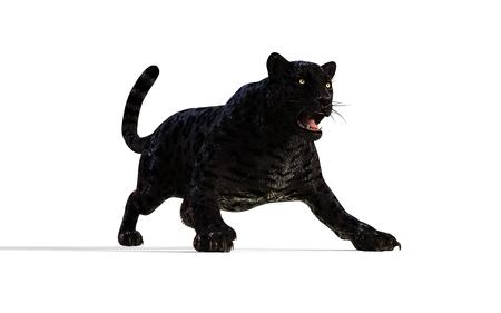 3d Illustration Black Panther Isolate on White Background  Black Tiger