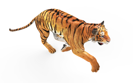 3d Illustration Dangerous Bengal Tiger Roaring and Jumping Isolated on White Background with Clipping Path. Stock Photo