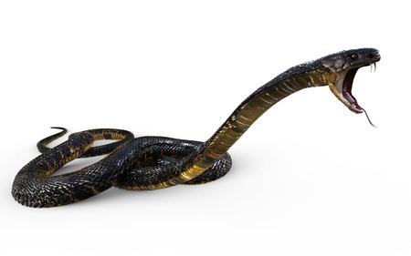 3d Illustration King Cobra The Worlds Longest Venomous Snake Isolated on White Background, King Cobra Snake, 3d Rendering