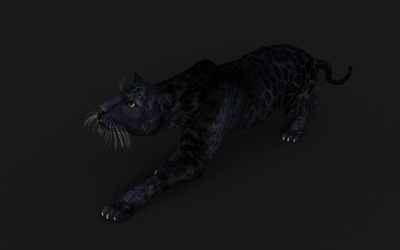 3d Illustration Black Panther Isolate on White Background with Clipping Path, Black Tiger
