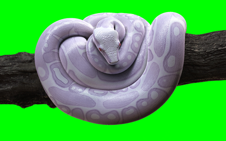 3d Illustration Boa Constrictor The Worlds Biggest Snake Isolated on Green Background with Clipping Path. Albino Anaconda. Фото со стока