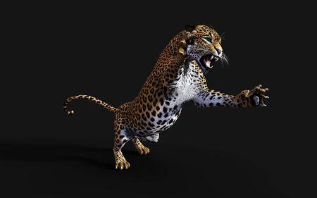 3d Illustration Leopard Isolate on Black Background, Panthera Pardus Reklamní fotografie
