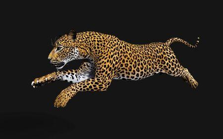 3d Illustration Leopard Isolate on Black Background, Panthera Pardus Banco de Imagens