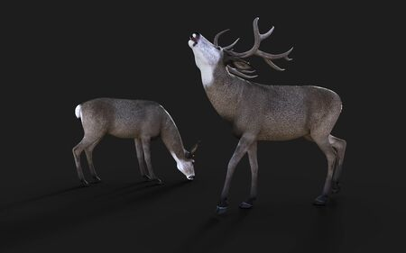 3d Illustration of Mule Deer Wildlife in the American West Isolate on Black Background