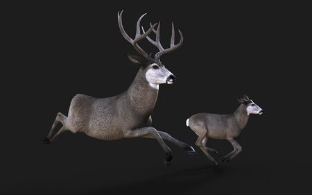 3d Illustration of Mule Deer Wildlife in the American West Isolate on Black Background Reklamní fotografie - 131667026