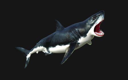 Worlds biggest great white shark isolate on black background, 3d Illustration, 3d Render Banco de Imagens