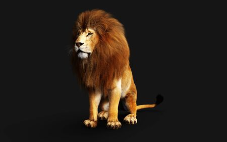 Dangerous Lion Isolated on Black Background, 3d Illustration.