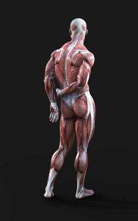 Rendering 3D di figure maschili in posa con mappa della pelle e dei muscoli al buio