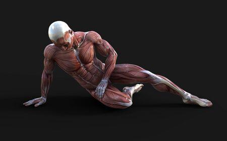 Le rendu 3D des figures masculines pose avec la peau et la carte musculaire sur l'obscurité