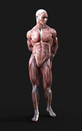 3D render of male figures pose with skin and muscle map on dark