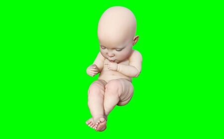 A new born infant baby isolated on green background, 3D model illustration