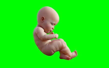 A new born infant baby isolated on green background , 3D model illustration Standard-Bild