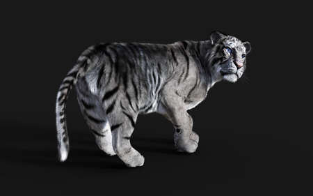 Dangerous White Bengal tiger Isolated on Dark Background with Clipping Path. 3d Illustration. Reklamní fotografie - 153240623