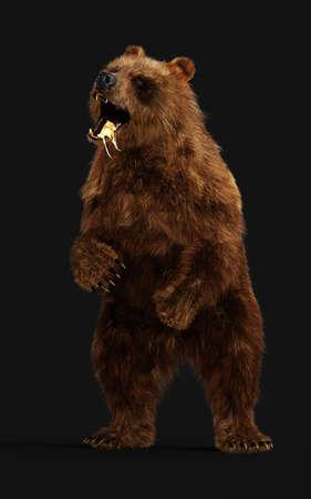 3d Illustration Large Brown Bear Posture isolated on Dark Background Reklamní fotografie - 154092503
